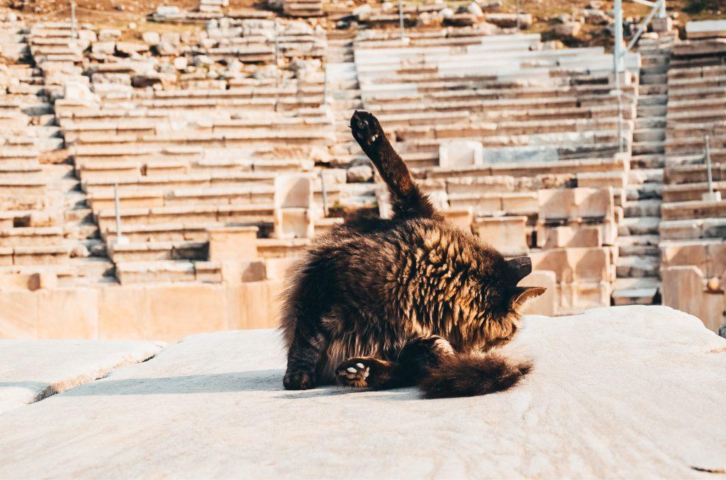Kot w Atenach