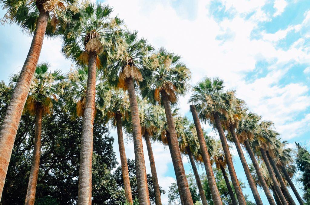 Aleja Palm w Ogrodach Narodowych w Atenach