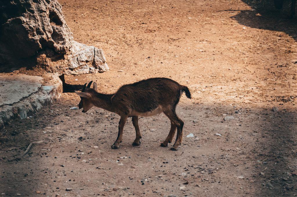 Zwierzęta w Ogrodach Narodowych
